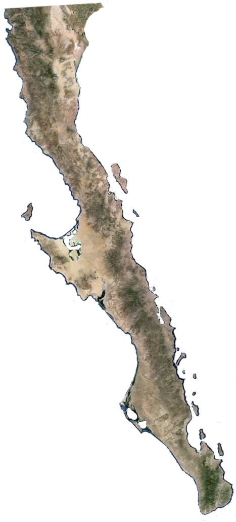 The Flora of Baja California